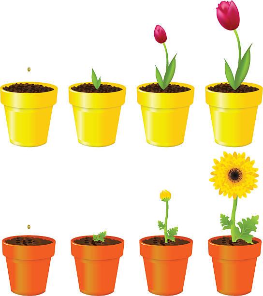 Flower Pot Clip Art Vector Images Illustrations Istock