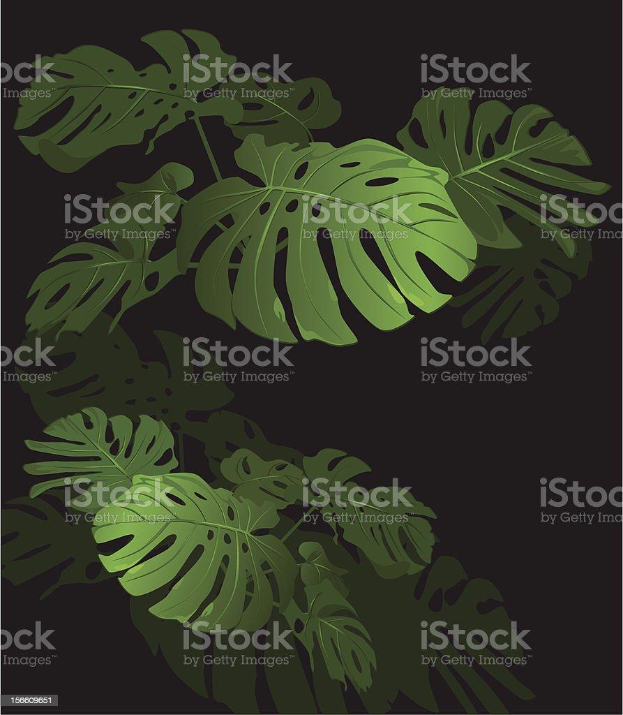 Flower monstera royalty-free stock vector art