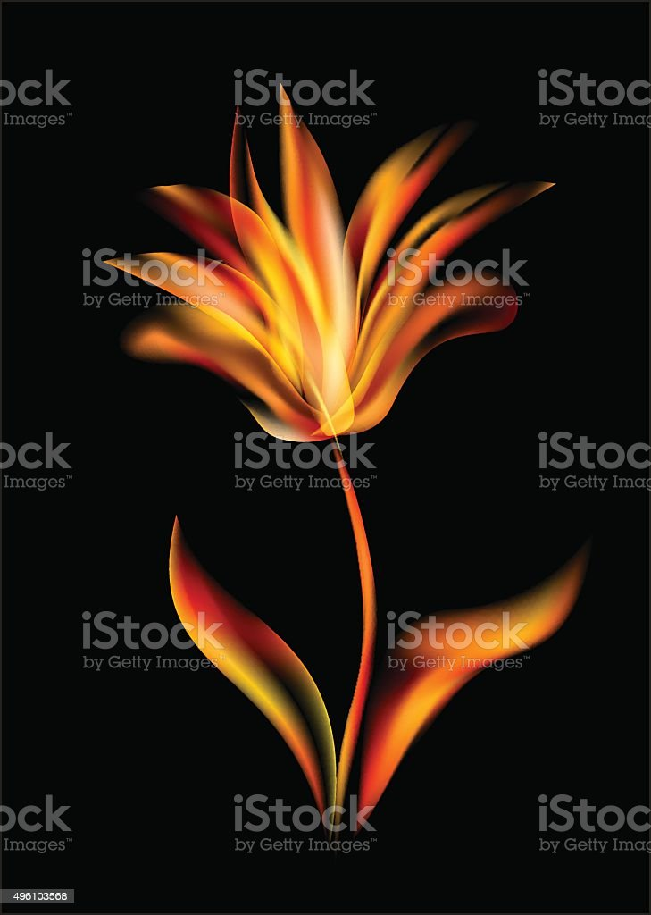 Flower of tulip disclosed flames rose flowers opening vector art illustration
