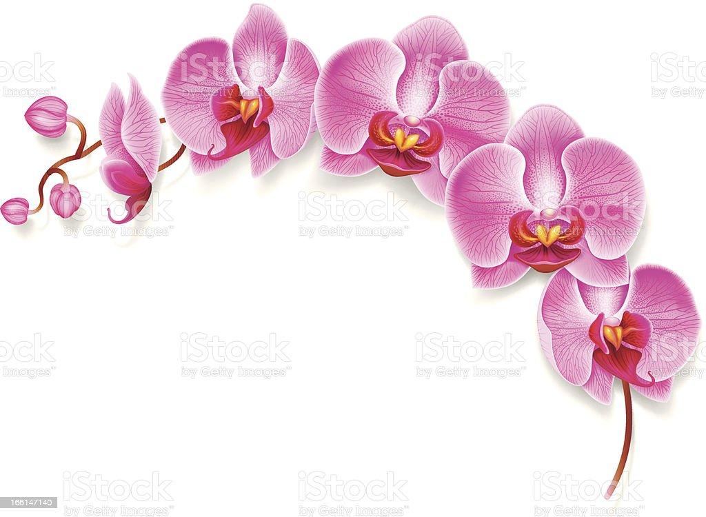 Flower orchid. vector art illustration