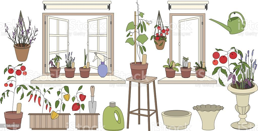 Flower pots with herbs and vegetables. Plants growing on balcony vector art illustration