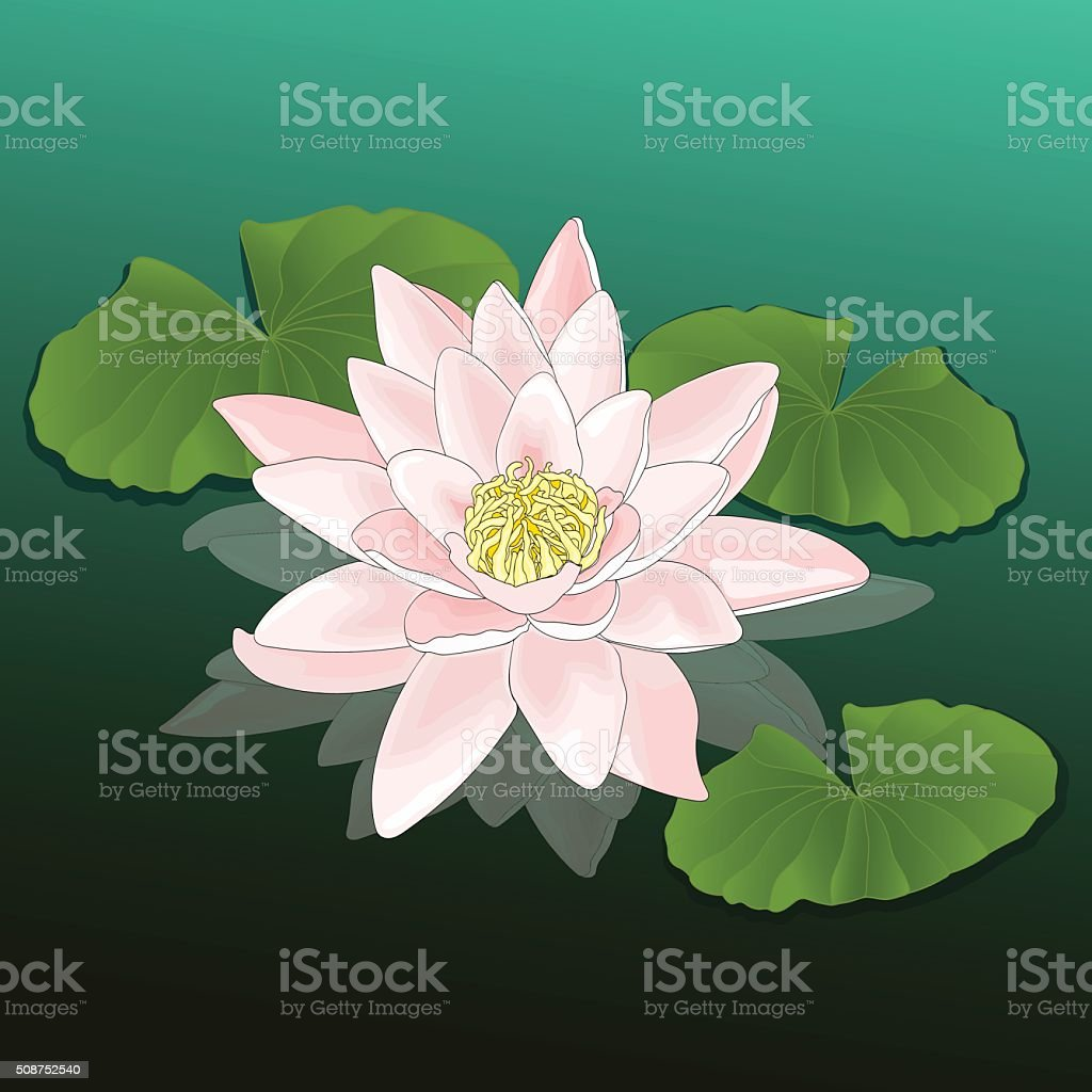 Flower Water lily. Lotus leaves on the water. Vector illustration royalty-free stock vector art