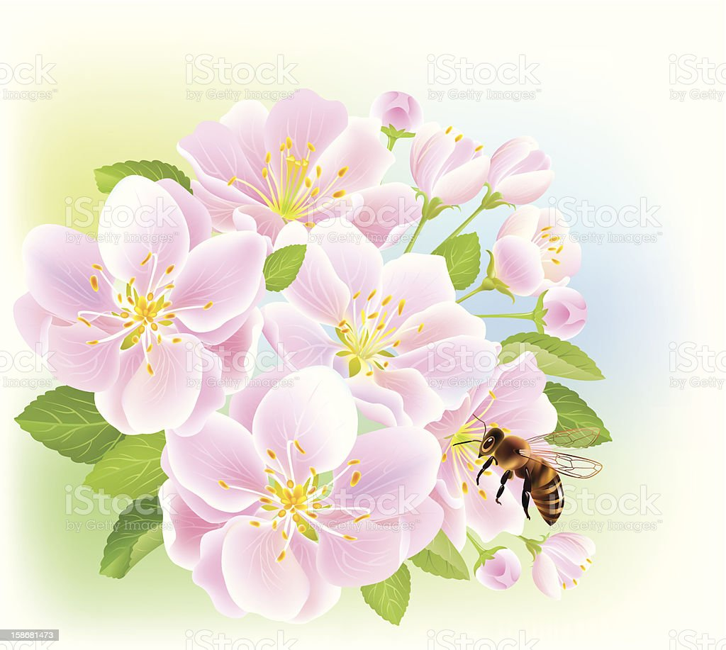 Flowering branch of apple with bee royalty-free stock vector art
