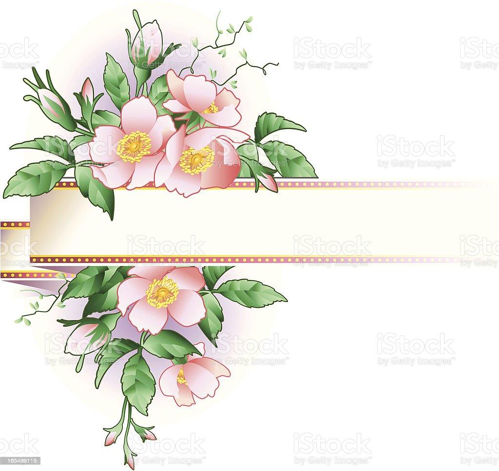 Flowering wild rose royalty-free stock vector art