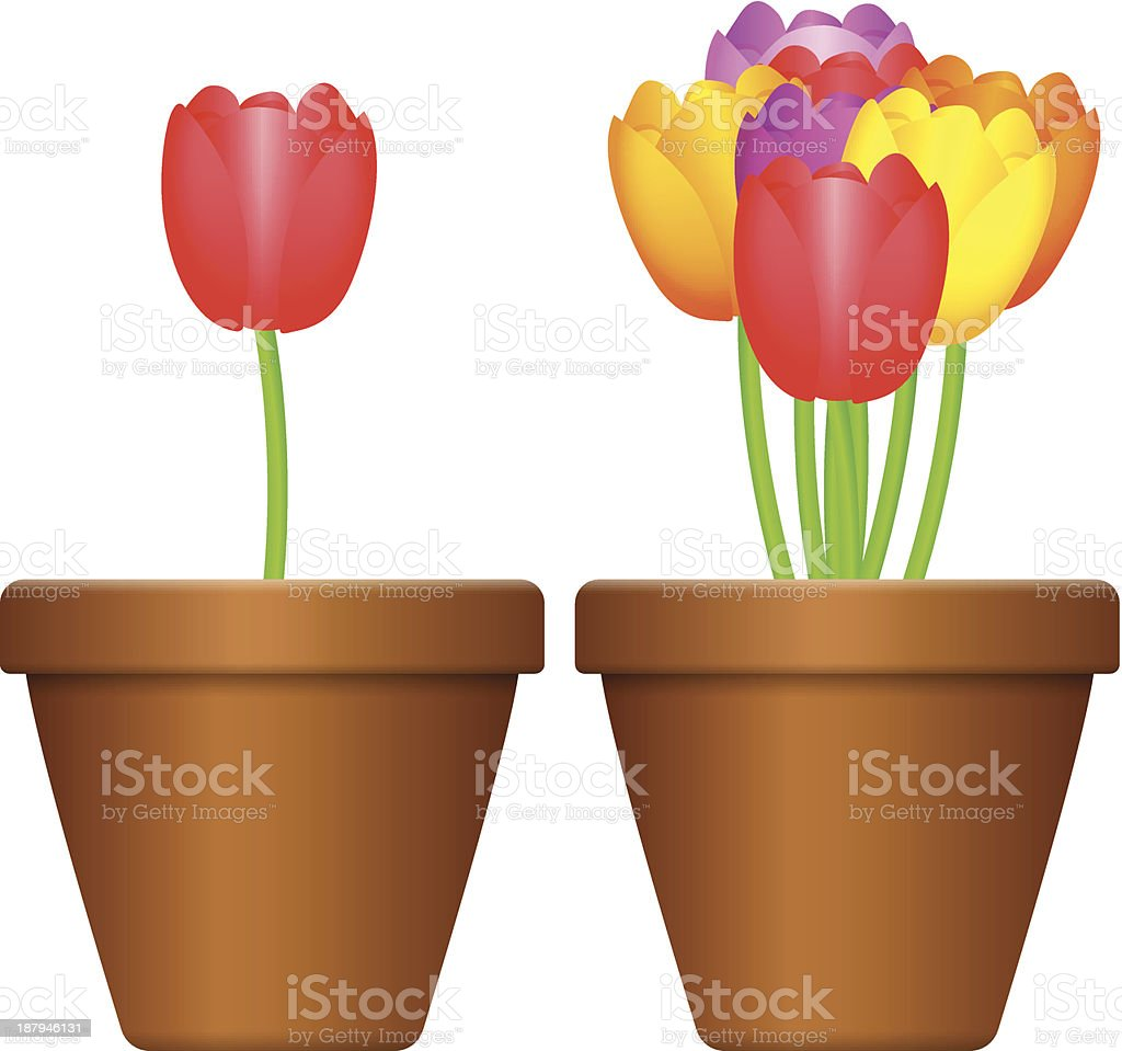 flowerpot and tulips royalty-free stock vector art