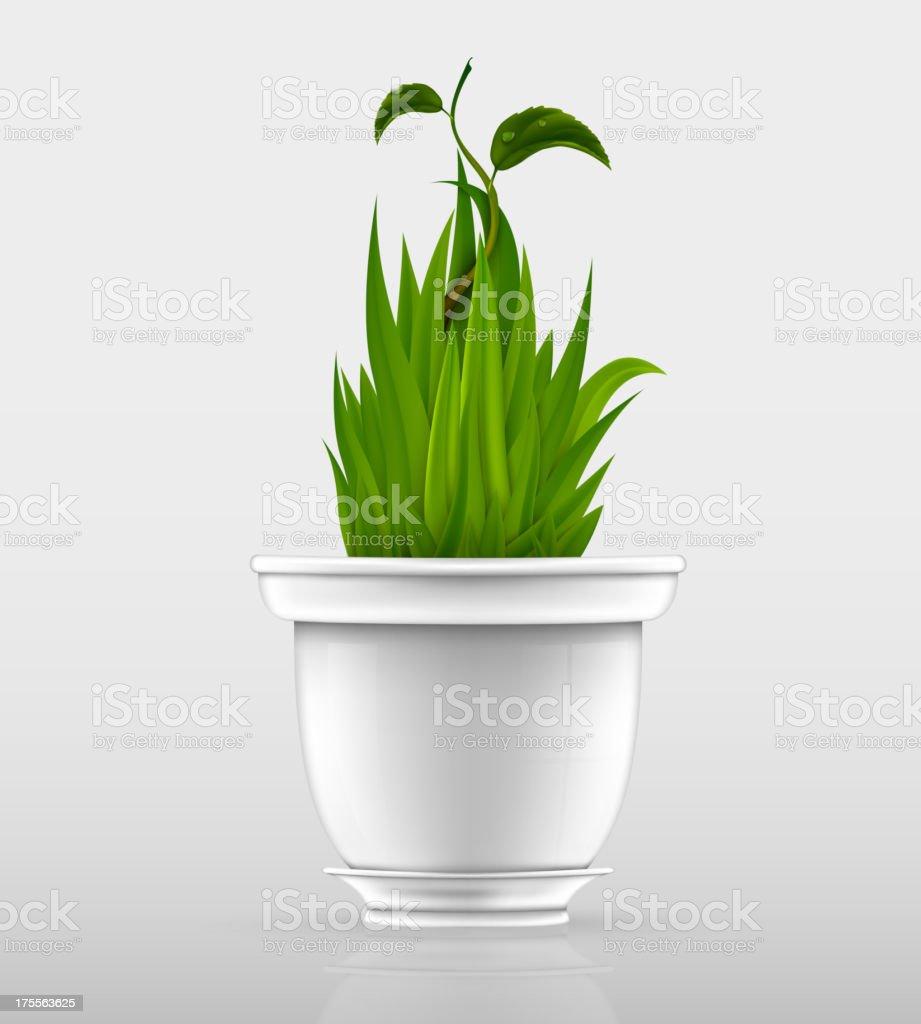 flowerpot with grass royalty-free stock vector art