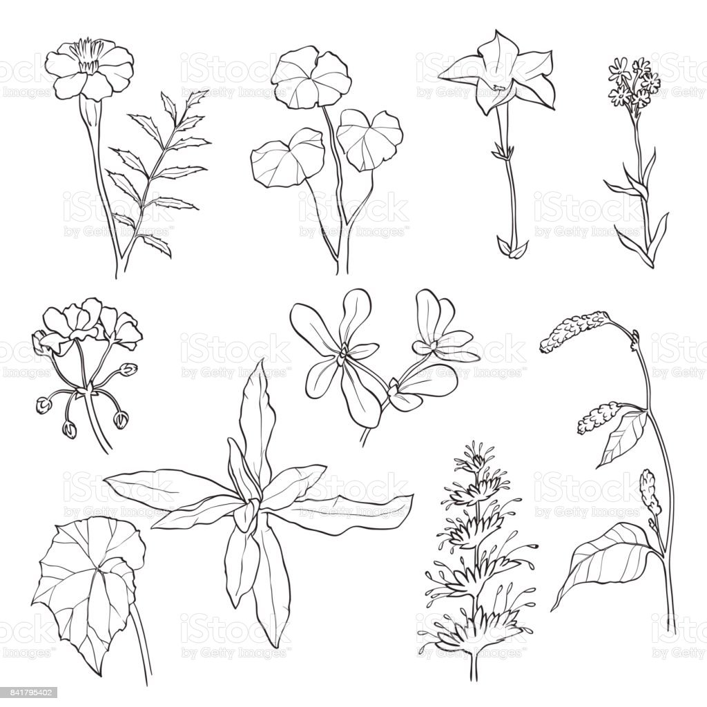 Flowers and leaves isolated on white background. vector art illustration