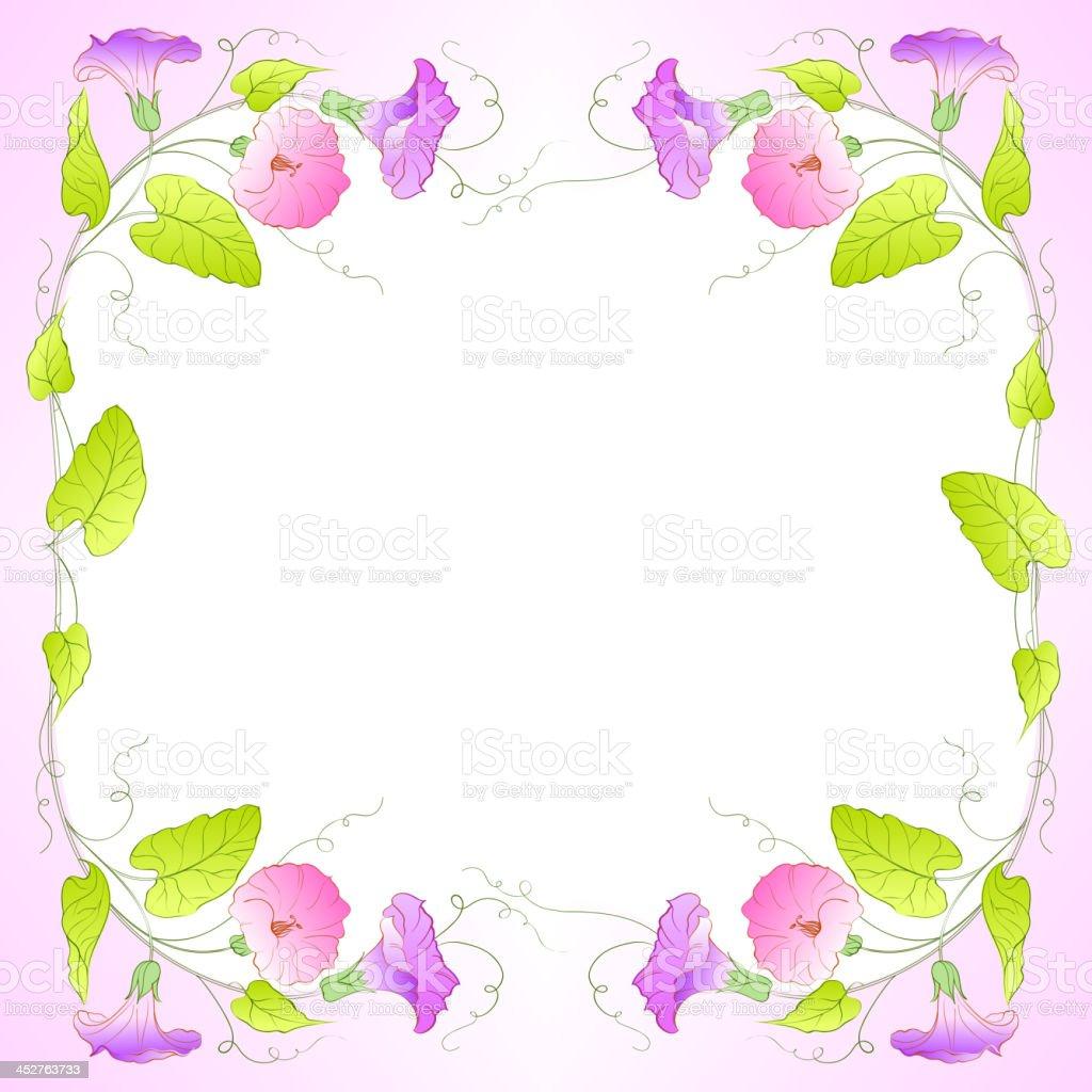 Flowers Frame of bindweed. royalty-free stock vector art
