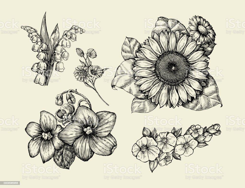 Flowers. Hand-drawn sketch flower, sunflower, white lily, violet...