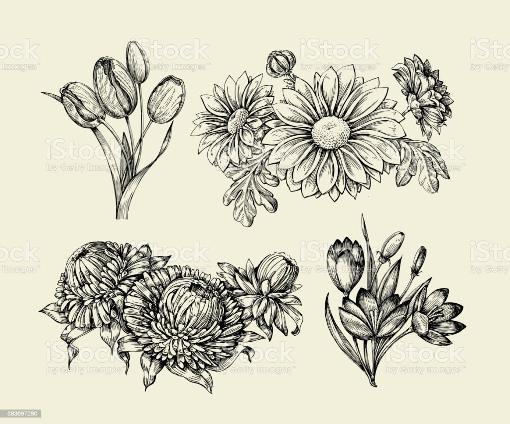 Flowers. Hand drawn sketch flower, tulip, astra, aster, crocus, chrysanthemum vector art illustration