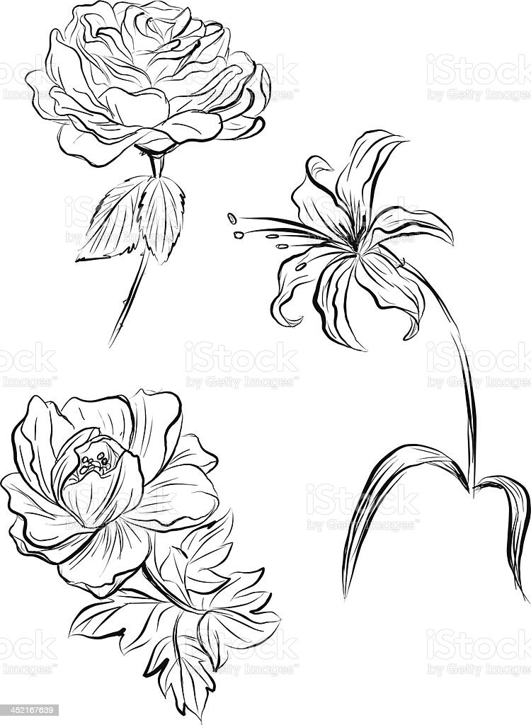 Flowers in sketch style vector art illustration