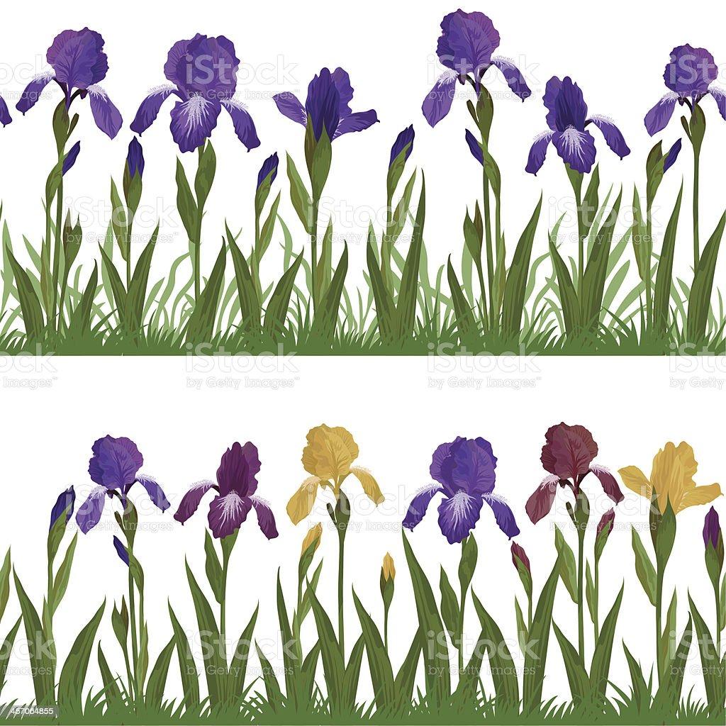 Flowers iris and grass, set seamless vector art illustration