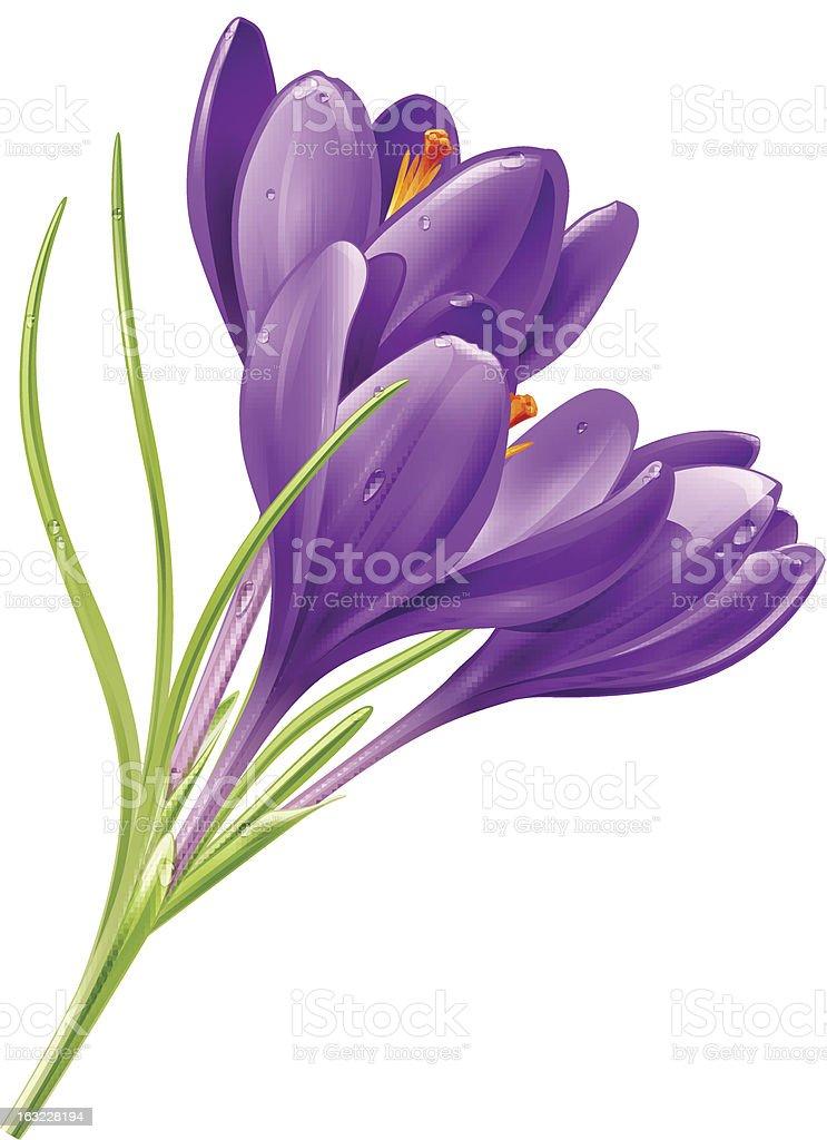 Flowers on a white background vector art illustration