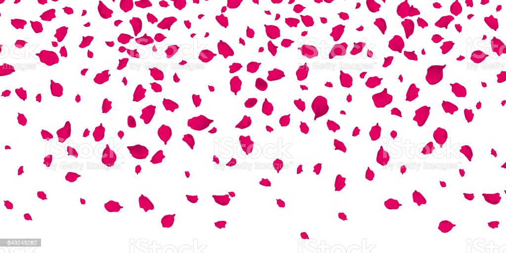 Flowers petals falling on vector transparent background vector art illustration