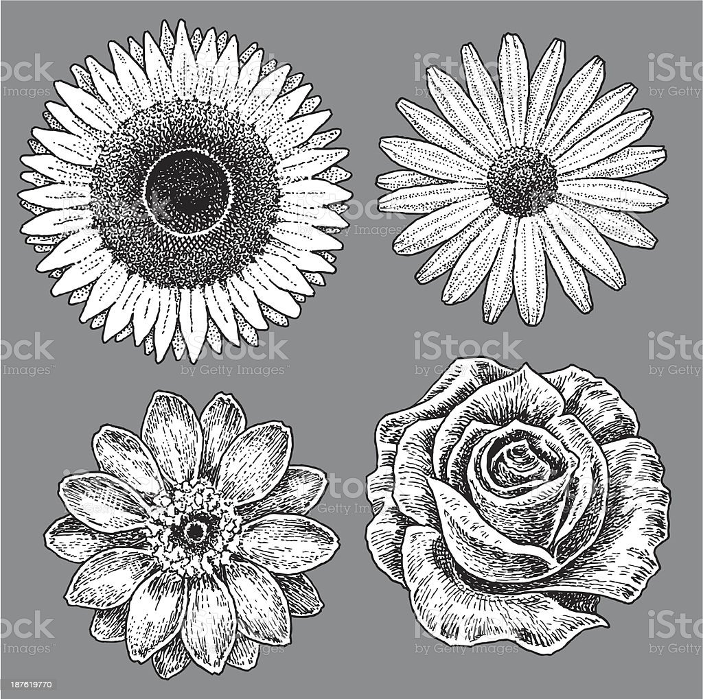 Pen and ink flowers, Rose, Daisy, Sunflower and Zinnia. Check out my...