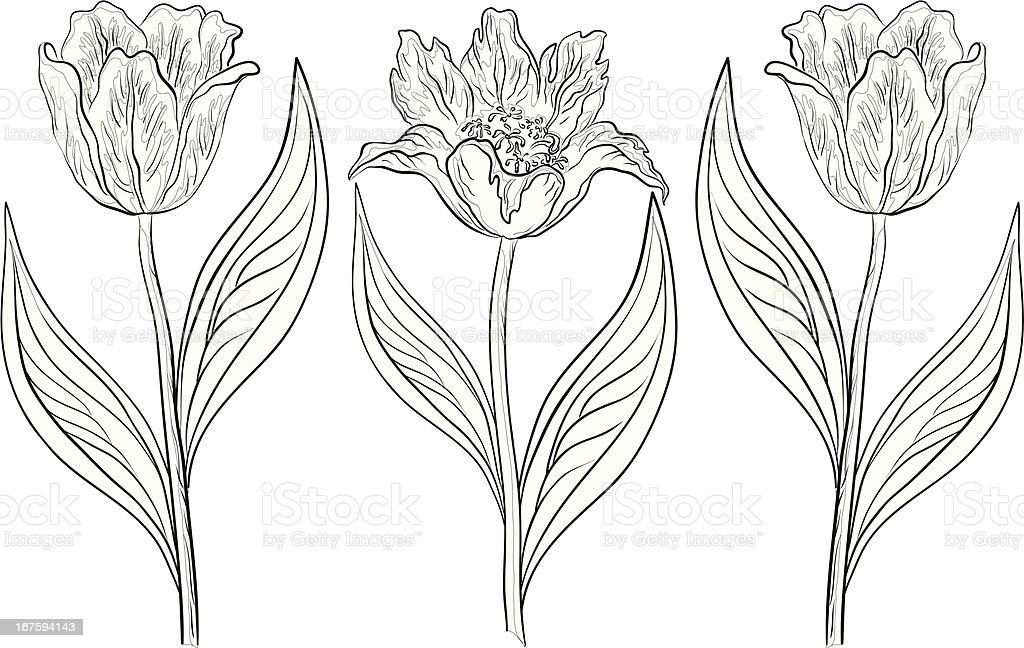 Flowers tulips, contours royalty-free stock vector art