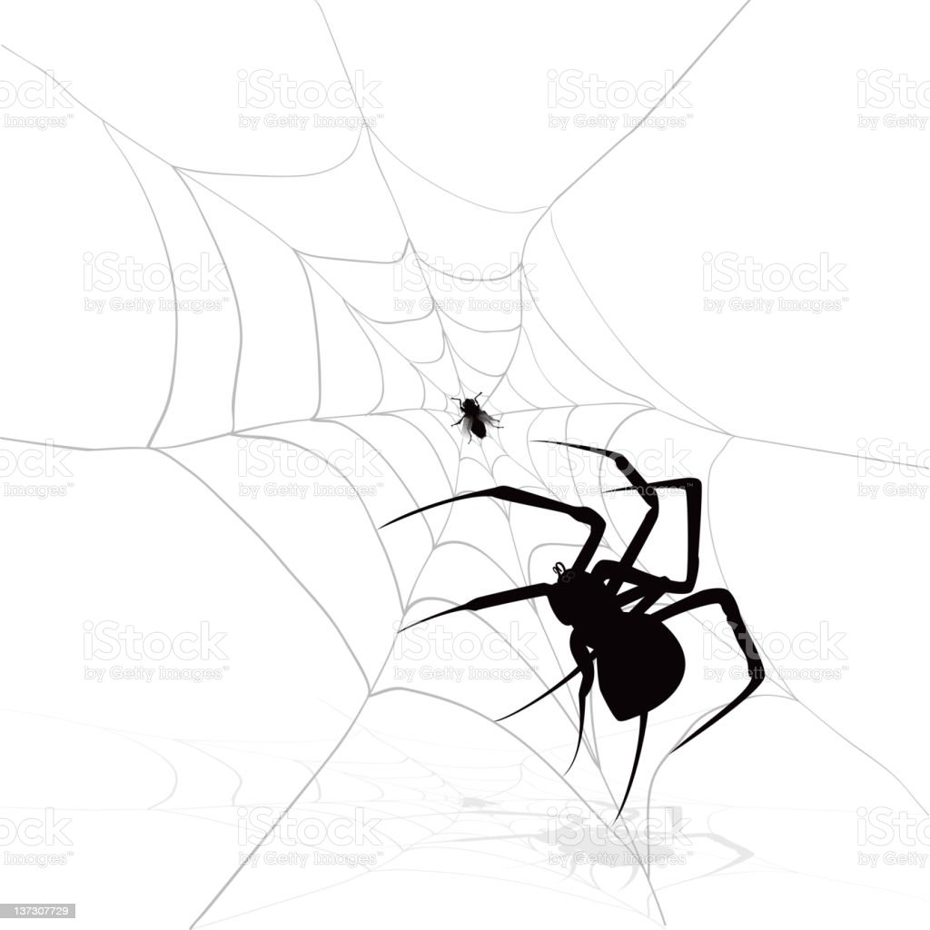 Fly in a web with spider, black and white image royalty-free stock vector art