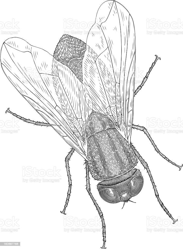 fly royalty-free stock vector art