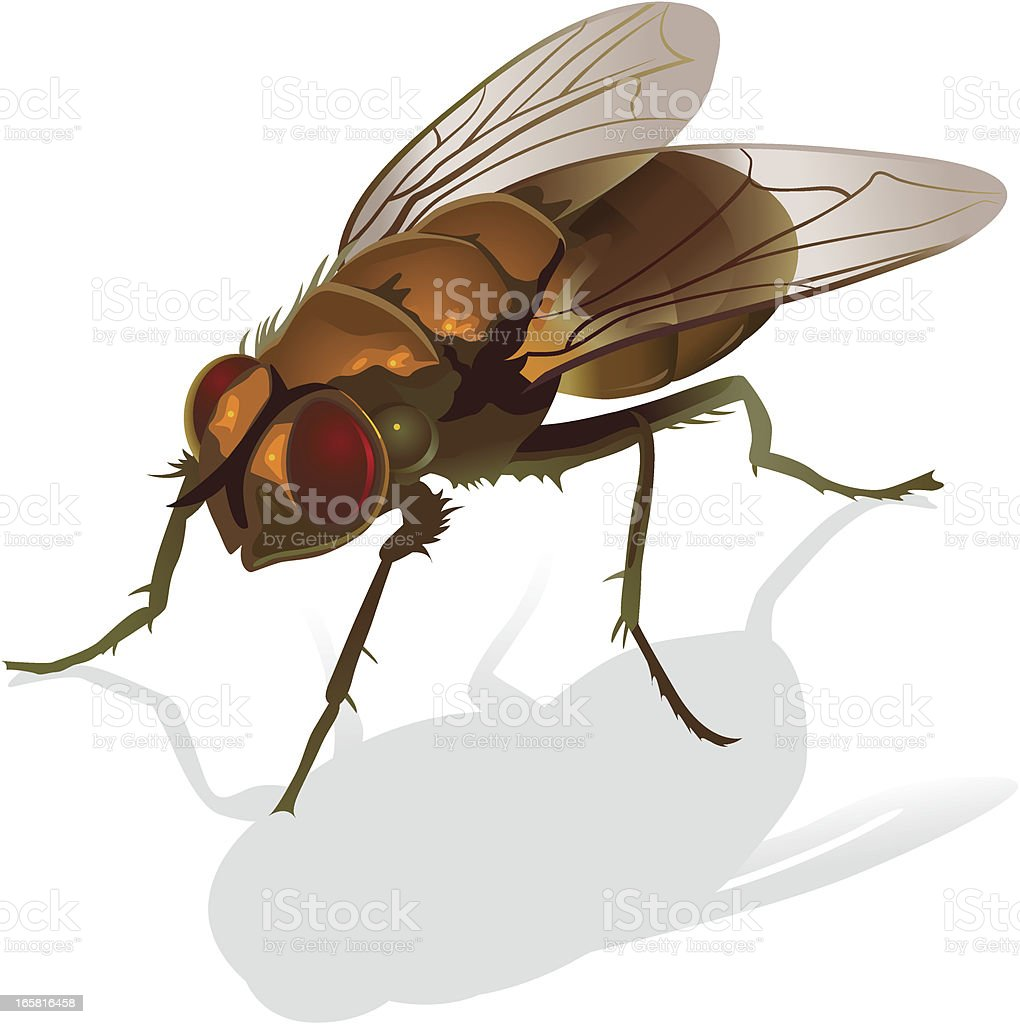 fly royalty-free stock vector art