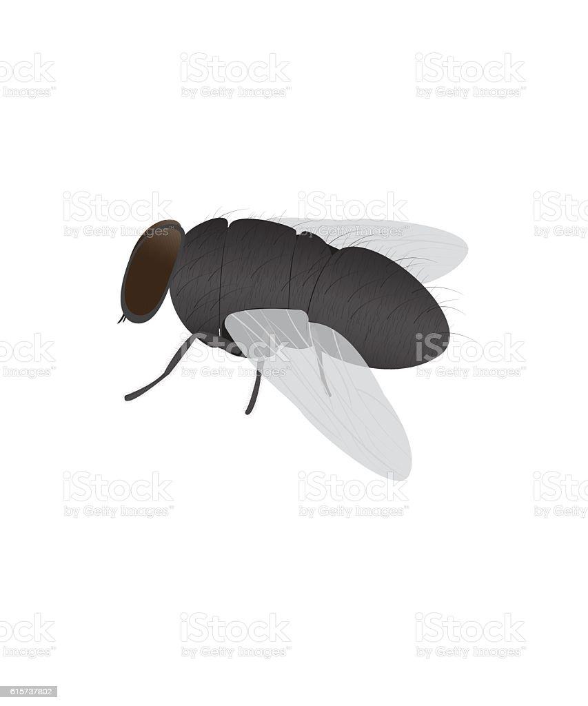 fly vector art illustration