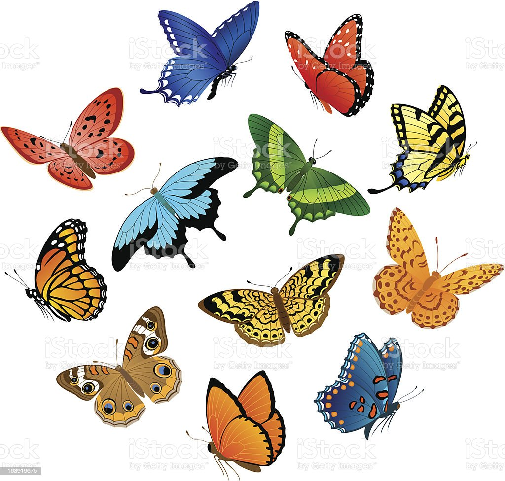Flying  butterflies vector art illustration