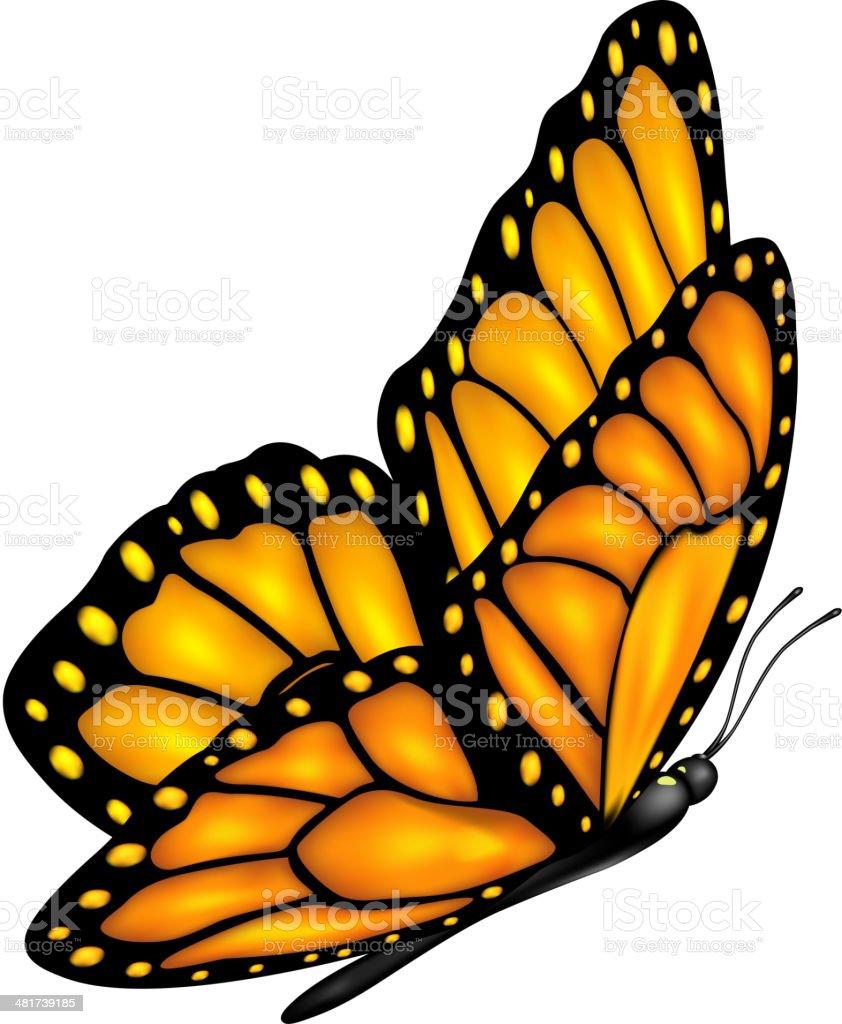 Flying butterfly vector art illustration