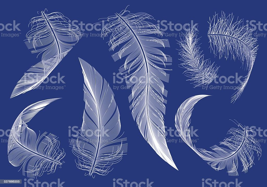 flying feathers, vector set vector art illustration