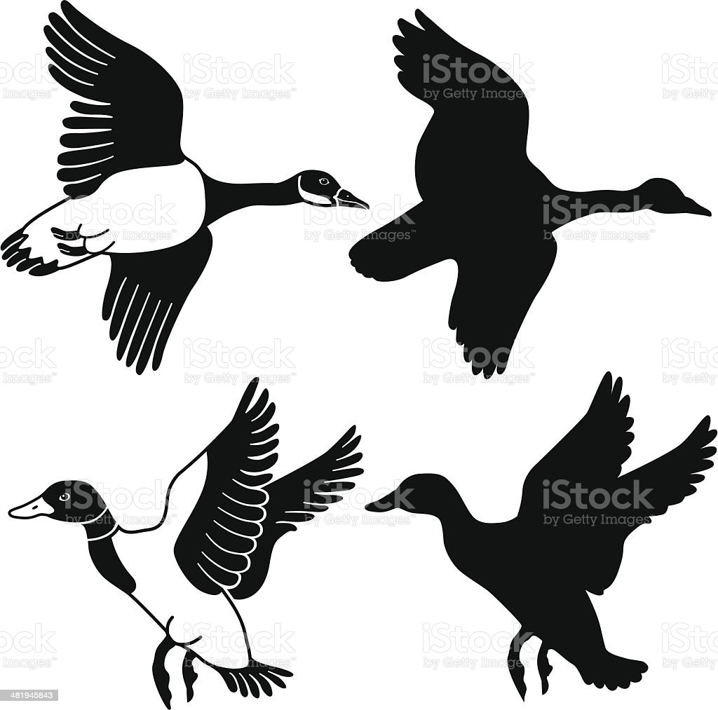 flying goose and duck royalty-free stock vector art