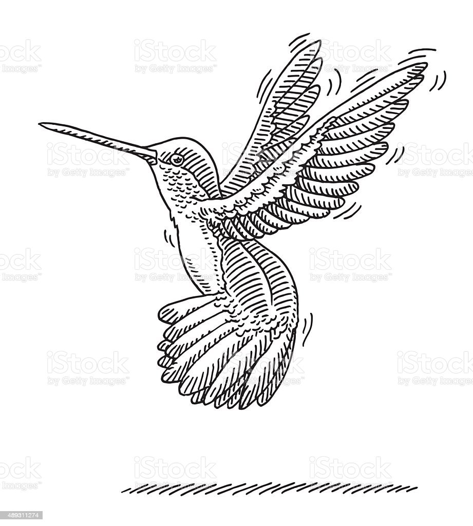 Flying Hummingbird Animal Drawing vector art illustration
