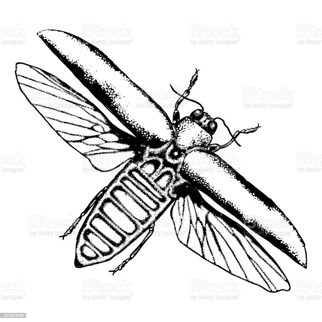 flying insect bug with wings scarab beetle vintage old hand drawn