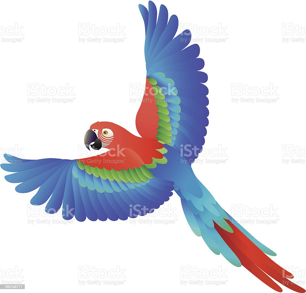 flying scarlet macaw vector art illustration