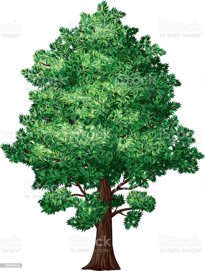 Foliage tree royalty-free stock vector art
