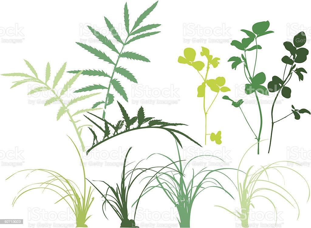 Folliage patterns - plants, grass, leaves, herbs. vector art illustration
