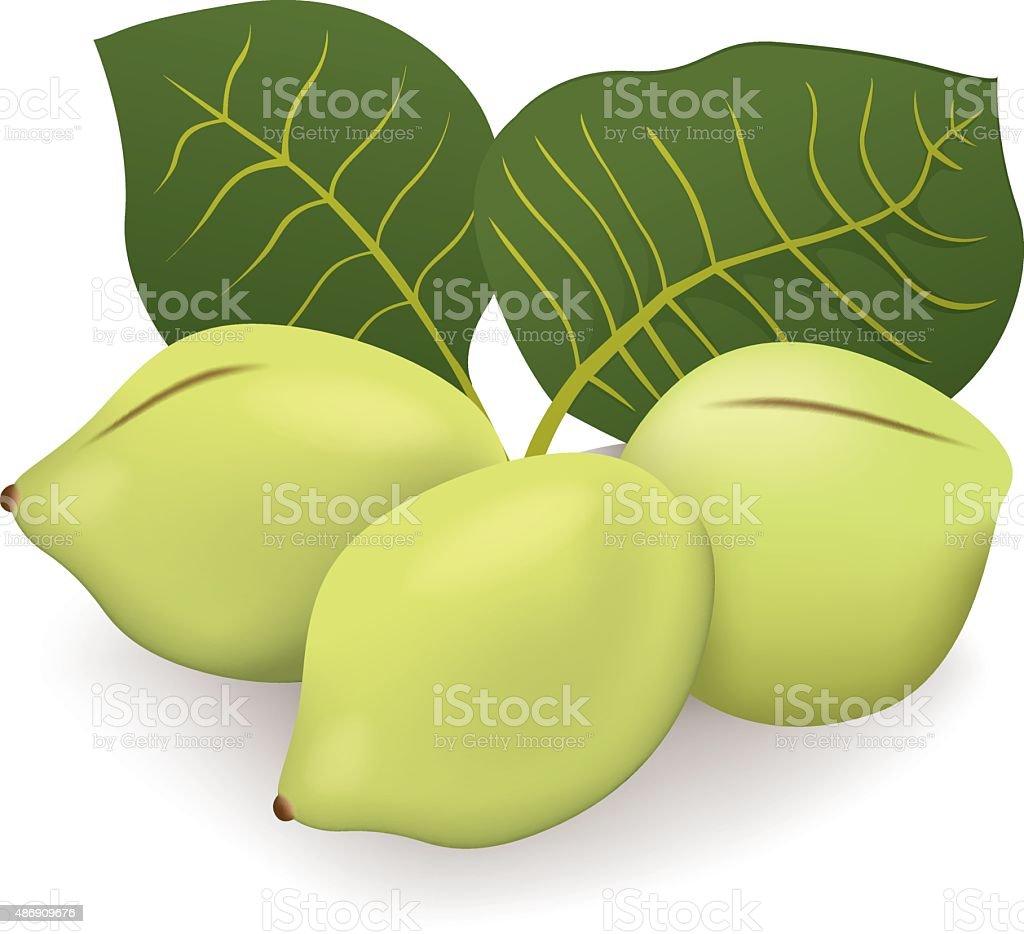 Food illustration, Kakadu plum fruit exotica Australia vector art illustration