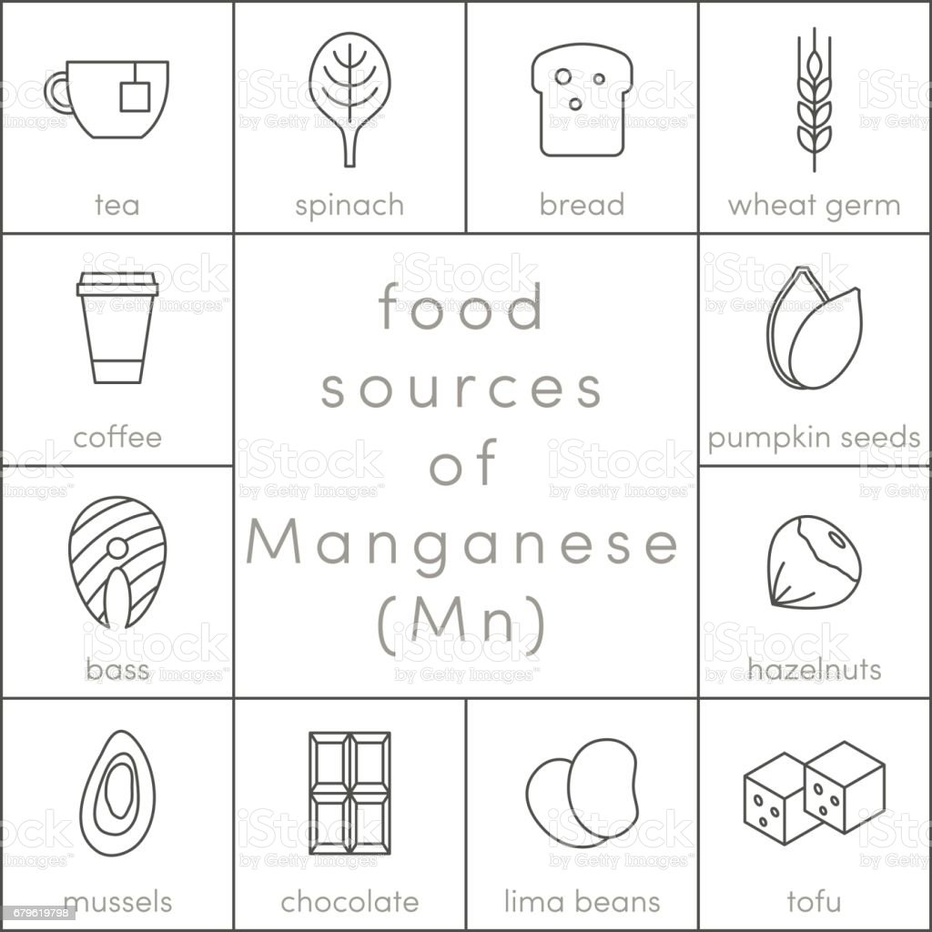 Food sources of manganese vector art illustration