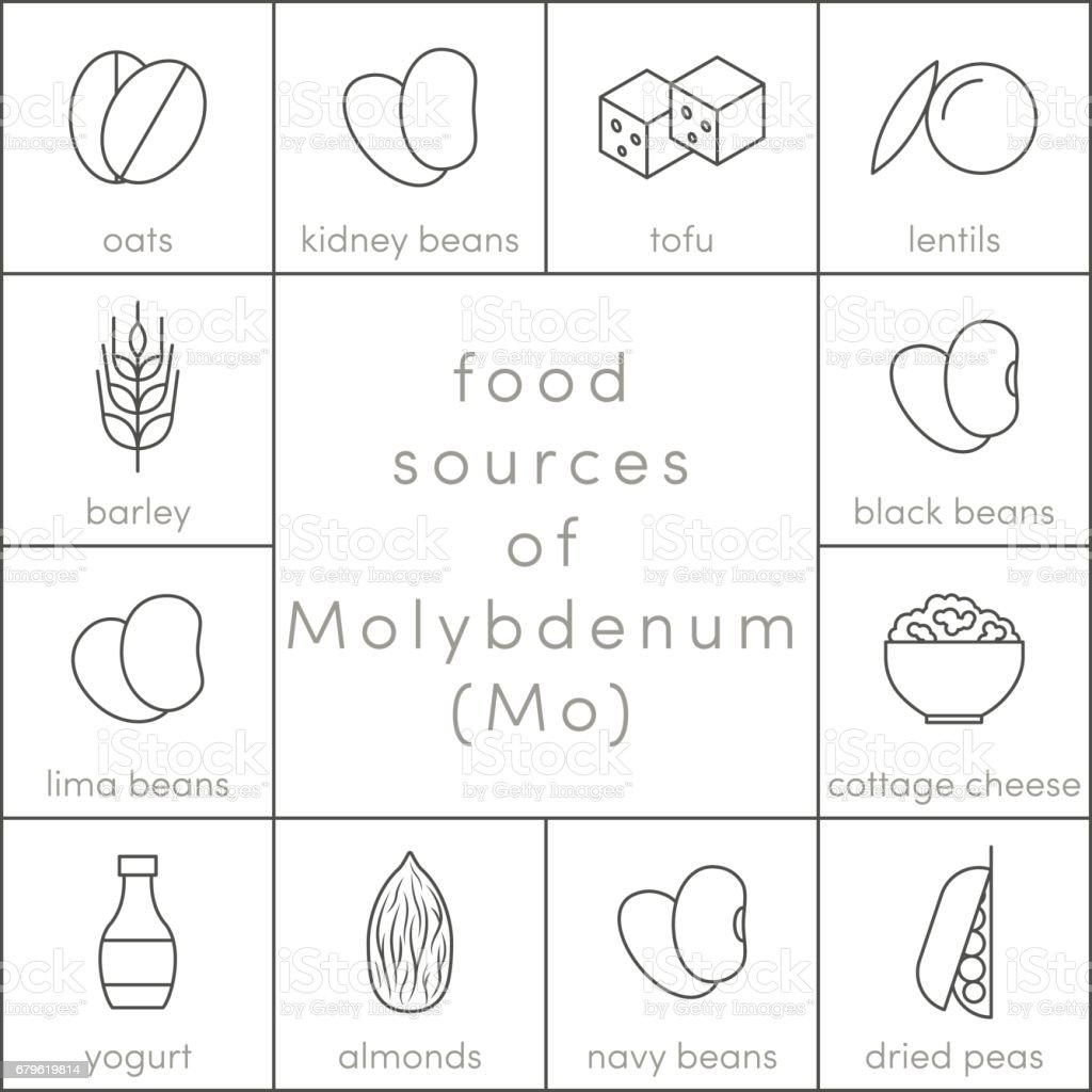 Food sources of molybdenum vector art illustration