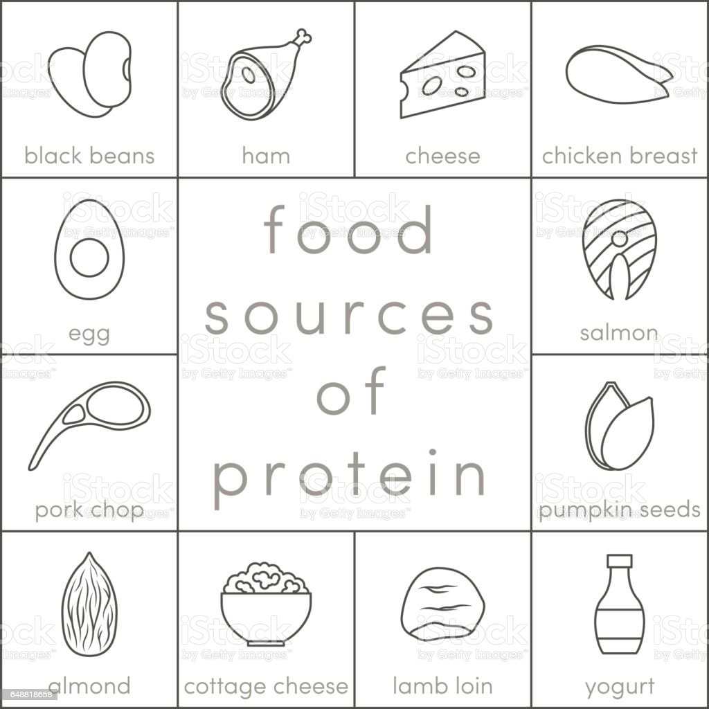 Food sources of protein vector art illustration