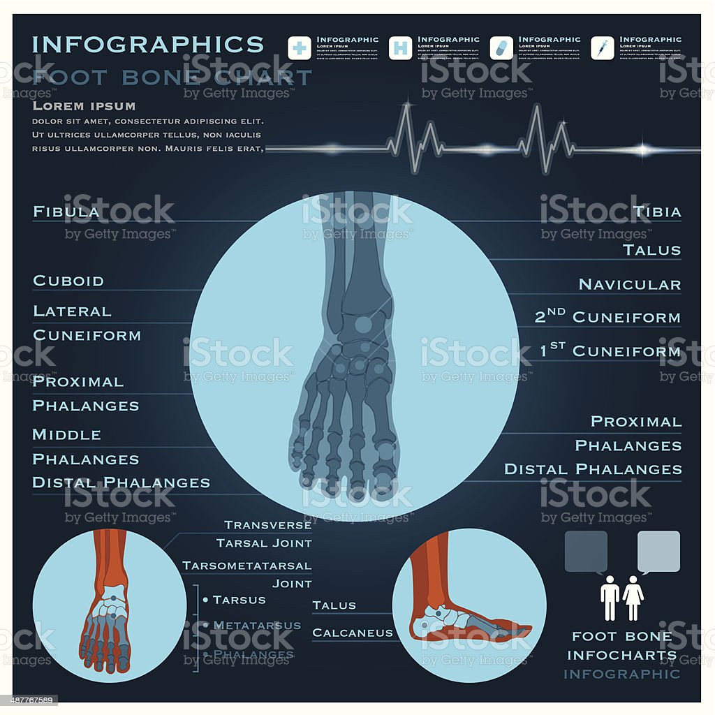 Foot Bone Infographic Infocharts Health And Medical vector art illustration