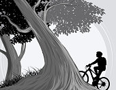 Forest and cycling