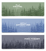 Forest horizon banners. Pine trees backgrounds vector illustration