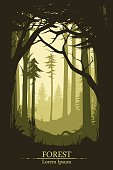 Forest illustration background