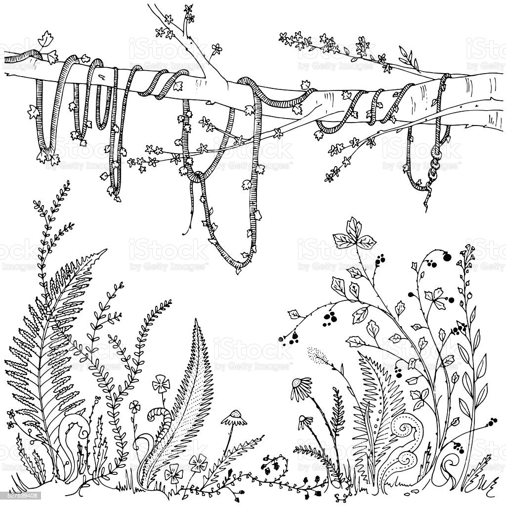 Forest undergrowth (ferns, flowers, vines, berries) hand drawn coloring page vector art illustration