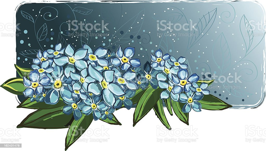 Forget-me-not royalty-free stock vector art