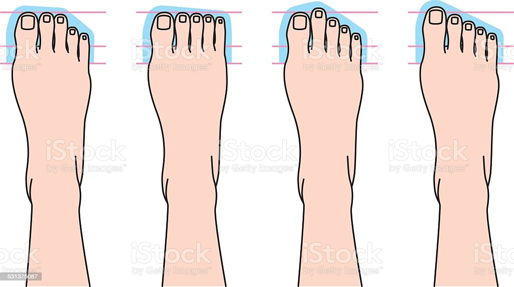 Form of toes vector art illustration