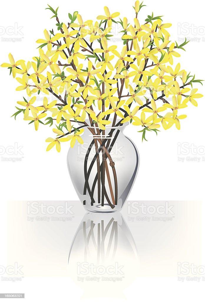 Forsythia branches royalty-free stock vector art