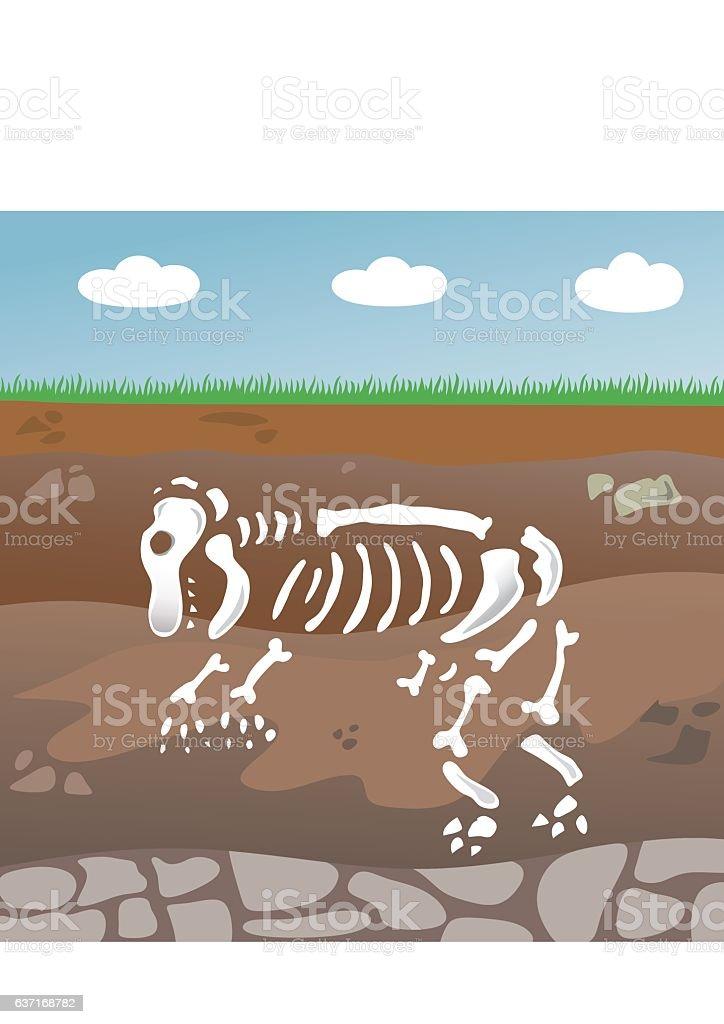 fossil vector art illustration