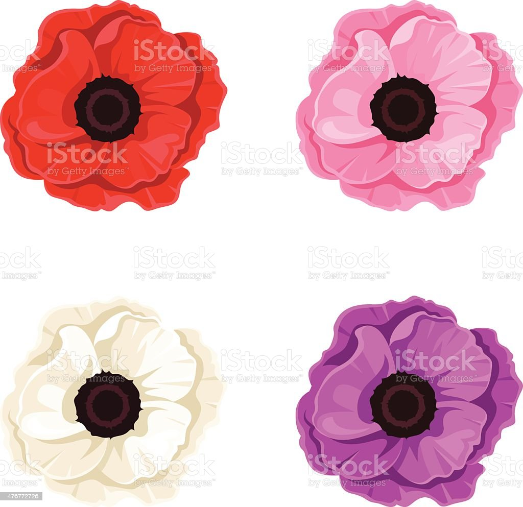 Four colorful poppies. Vector illustration. vector art illustration