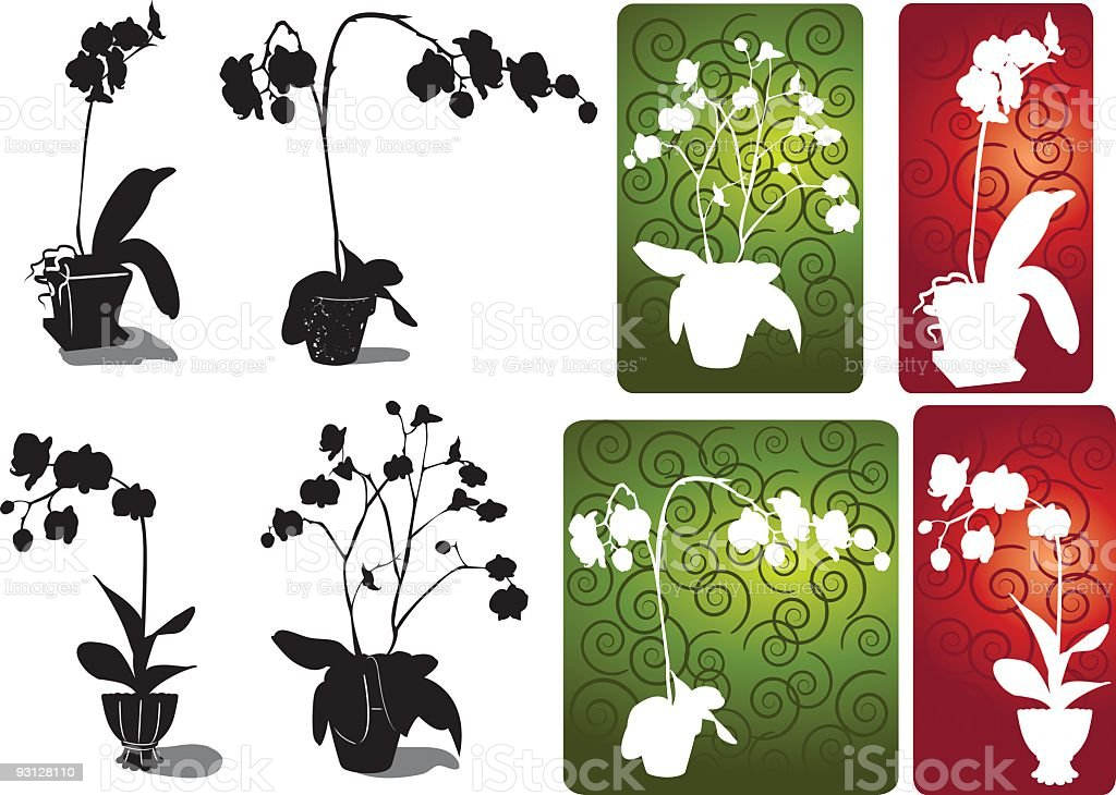 Four Different Orchid Silhouettes on White,Green and Red vector art illustration