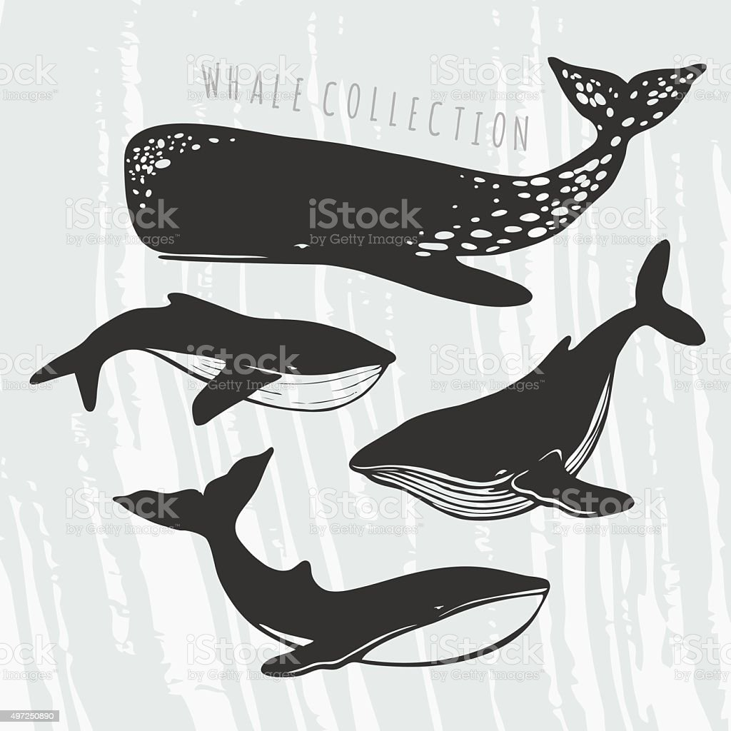four different whales illustrations vector art illustration