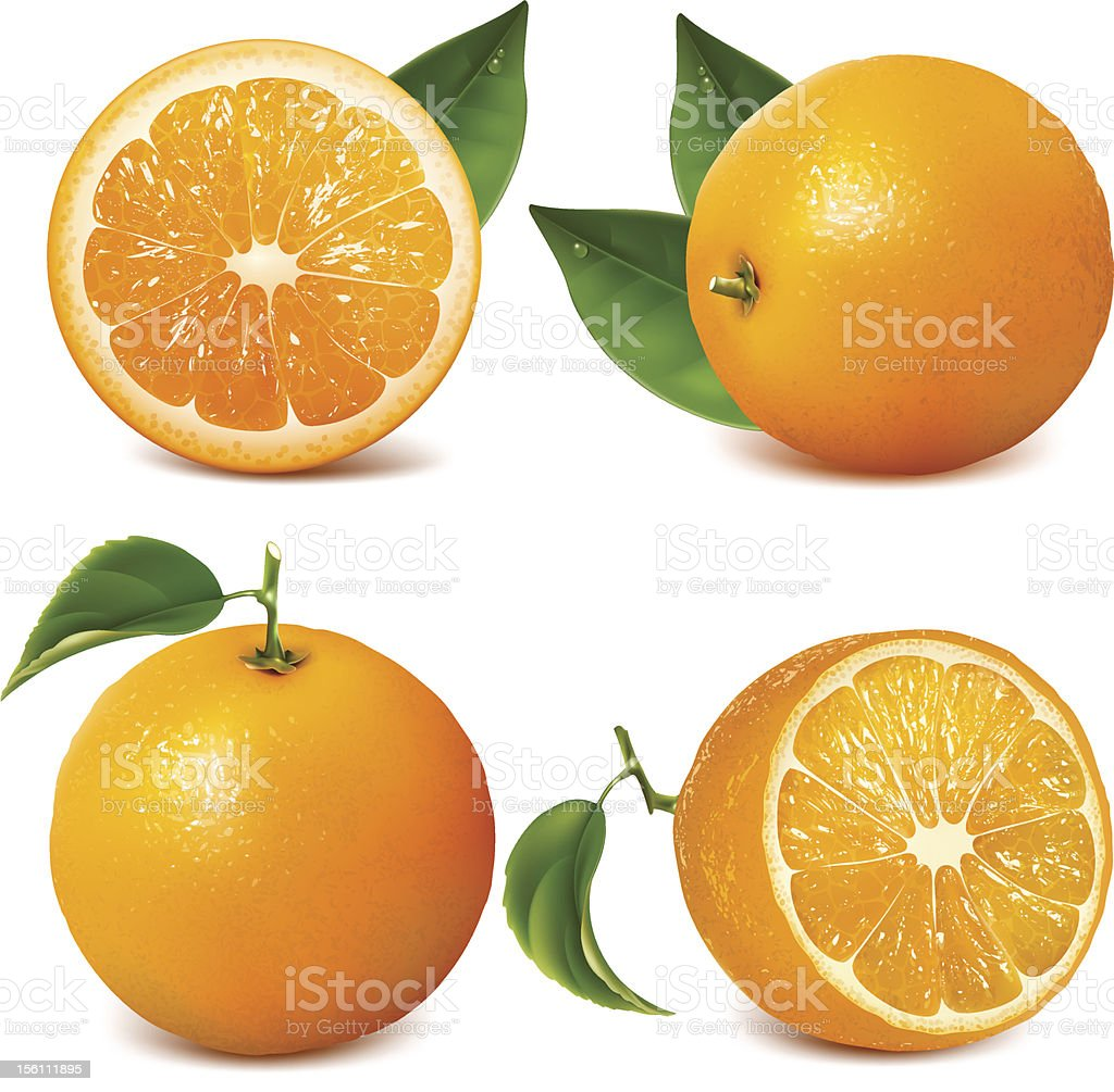Four fresh oranges with leaves, two sliced vector art illustration
